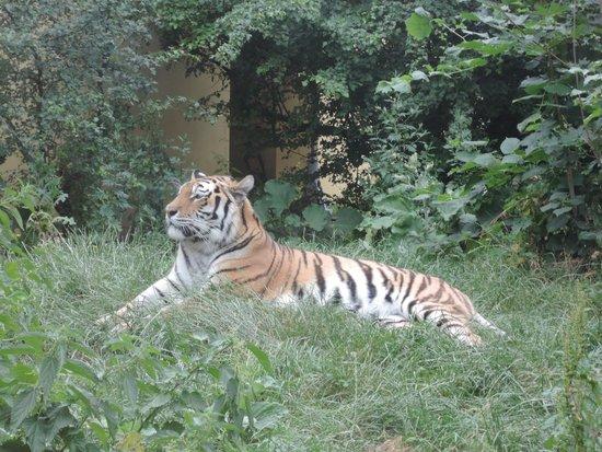 Tiergarten Schoenbrunn - Zoo Vienna: Hoheit persönlich