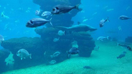 Palma Aquarium: Tanque tiburones