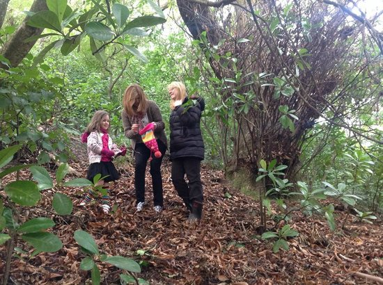 Blythcliffe: foraging for chestnuts to roast