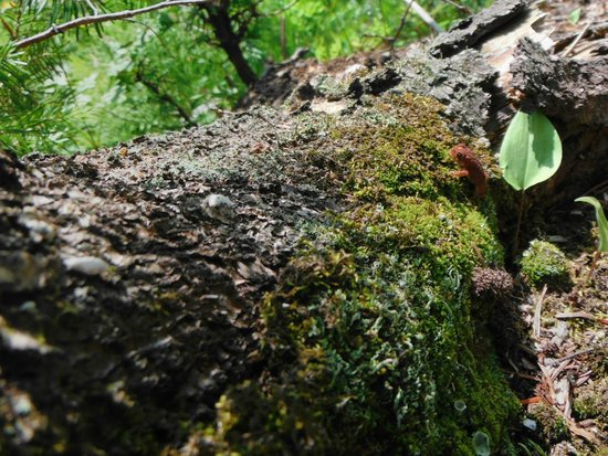 Pattison State Park: Just a little frog along the trail