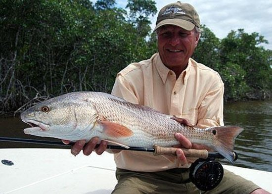 Fly fishing snook picture of everglades sight fishing for Fly fishing redfish