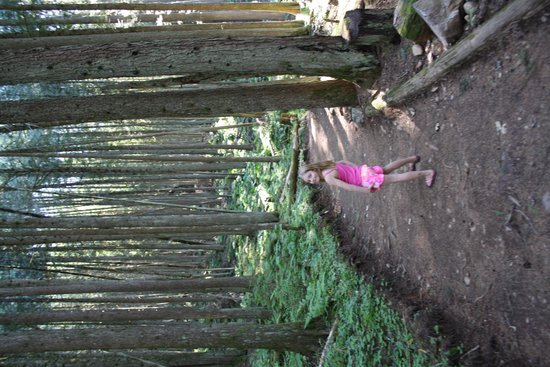 The Enchanted Forest: along the path of the forest