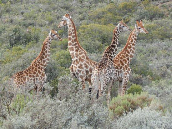 Madi-Madi Karoo Safari Lodge: Madi Madi wildlife