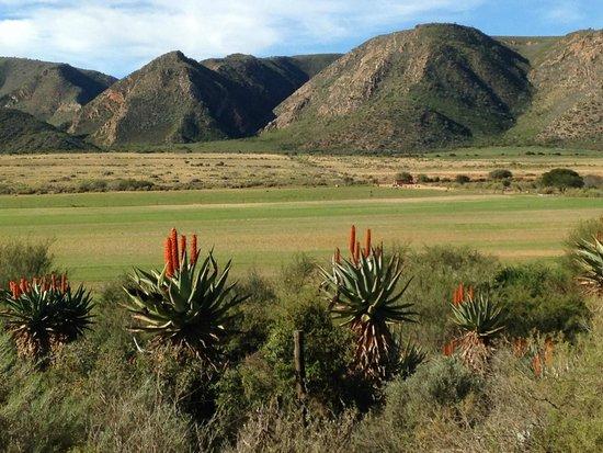 Madi-Madi Karoo Safari Lodge: pristine views