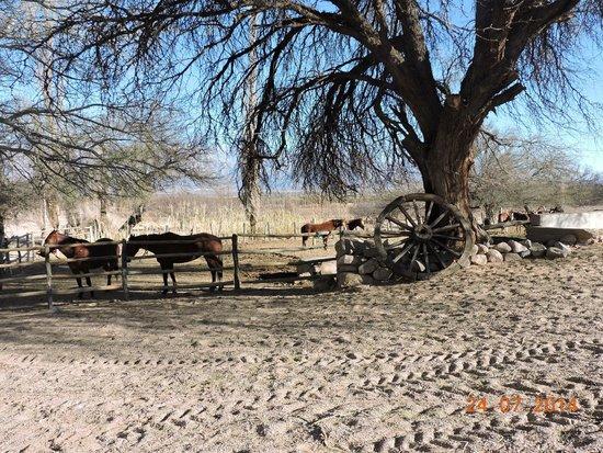 Estancia Chimpa : caballos