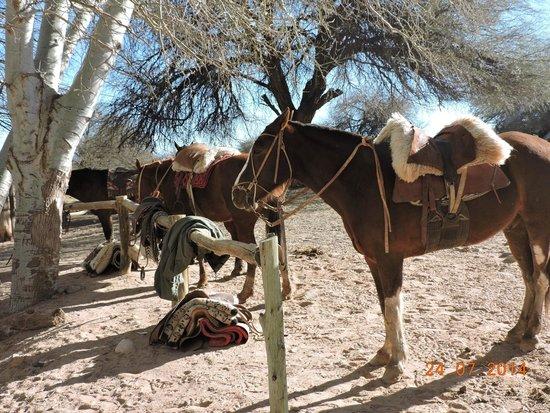 Estancia Chimpa : los caballos