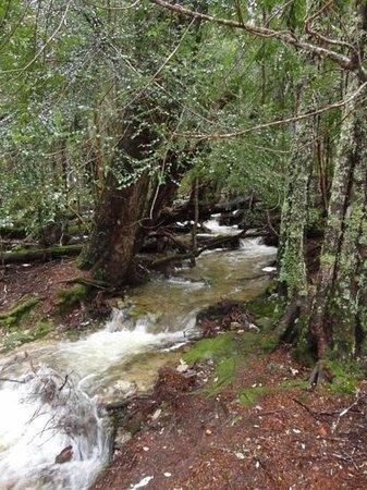 Dove Lake Circuit: Stream/waterfall near boardwalk at Dove Lake