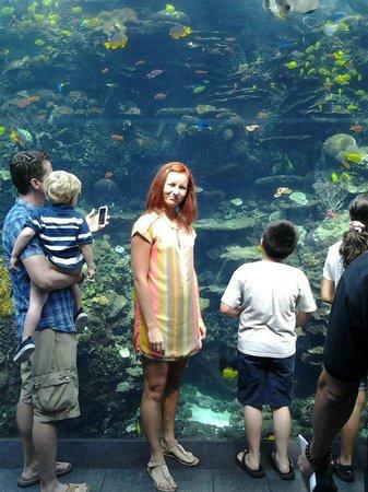 Georgia Aquarium: на фото цвет рыбок совсем не тот, что в реале (намного-намного красочнее)