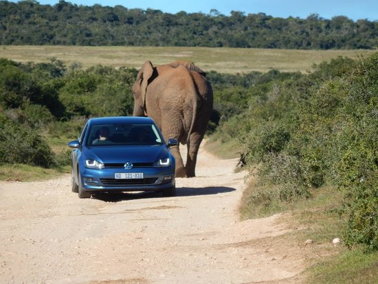 Addo Elephant National Park: sharing the roads with the locals