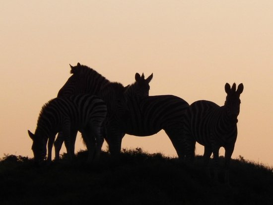 Addo Elephant National Park: sunset in addo