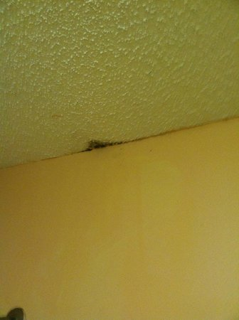 Baymont Inn & Suites Brunswick GA: Black mold in bath room!