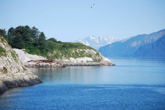 Gustavus, AK: Glacier Bay- breathtaking!