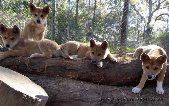 Dingo Sanctuary