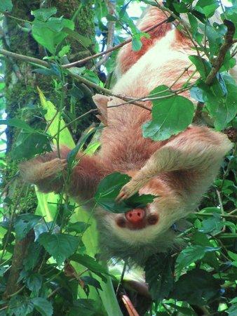 Ecocentro Danaus: Sloth