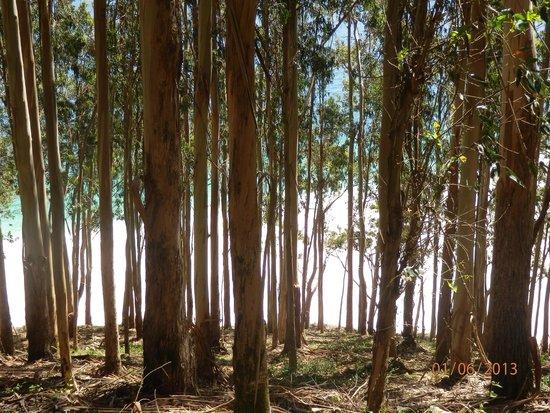 Playa de Rodas: vista de la playa a traves del bosque...