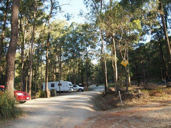 Tamborine Mountain Caravan and Camping: Campground