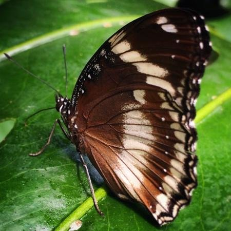 Victoria Butterfly Gardens: Yes, you can get this close!