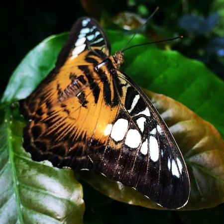 Victoria Butterfly Gardens: So many beautiful butterflies!