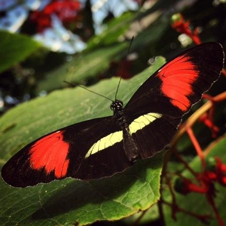 Victoria Butterfly Gardens: Taken with my iPhone!