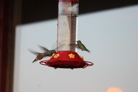 Mustachio's On The Lake: Humminbirds by the back lakeside deck