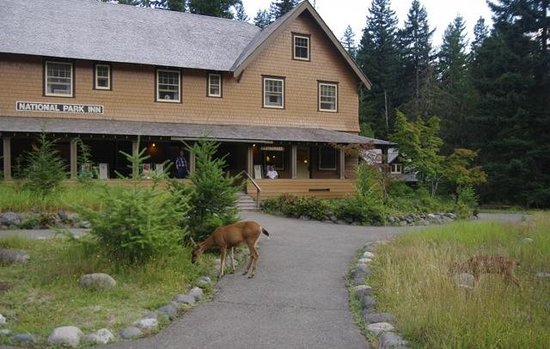National Park Inn at Mount Rainier : Doe and fawn at dusk