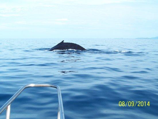 Fishing Adventures: Humpback whale Mama