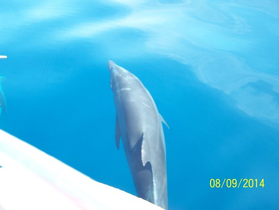 Fishing Adventures: Dolphins right beside boat