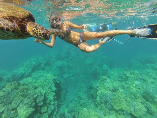 Hawaiian Paddle Sports: Turtle friends!