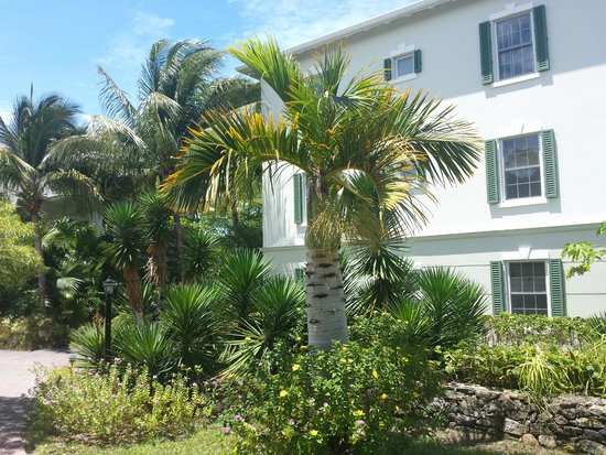 Royal West Indies Resort: Lovely grounds- Flowers & palms