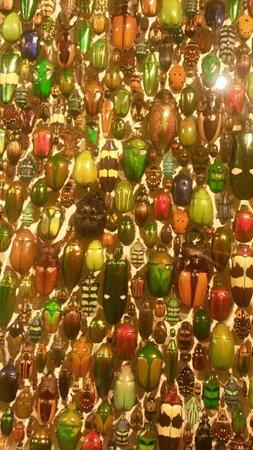 Insectarium de Montréal : Insects mosaico