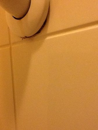 Residences at Daniel Webster: mildew in the shower handle under the seal - yuck!