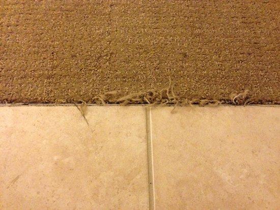 Westin Charlotte : Carpet
