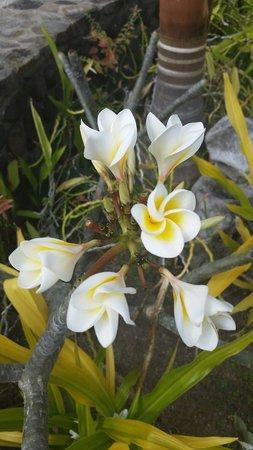 Volivoli Beach Resort Fiji: Beautiful flowers