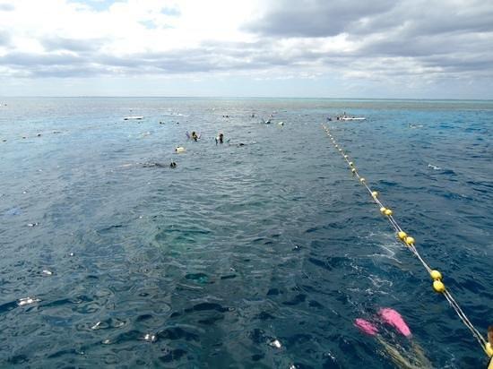 Agincourt Reef: snorkelling