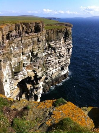 Pierowall, UK: Spectacular sea cliffs and nesting birds