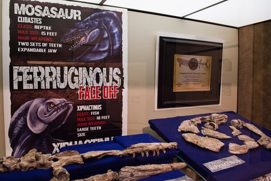 Canadian Fossil Discovery Centre: Creative displays