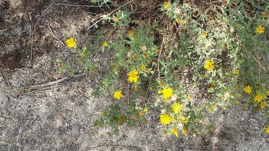 City Of Rocks National Reserve : Beautiful wild flowers