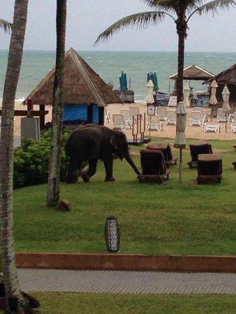 Angsana Laguna Phuket: Elephant on beach