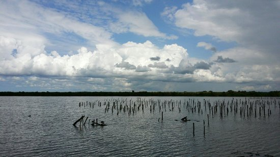 Teich Bird Reserve: Vue sur les cormorans