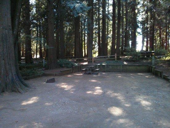 Lynden / Bellingham KOA: Tent Area