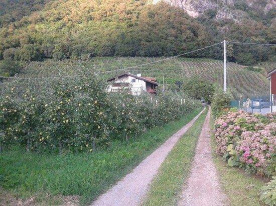 Strasserhof: Vista dalla strada