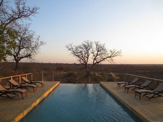 Simbavati Hilltop Lodge: infinity pool