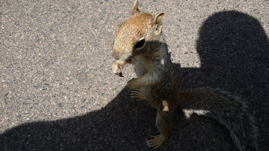 Grand Canyon South Rim: Stephon's new friend, a bit squirrelly