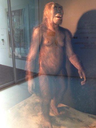 Pole International de la Prehistoire: Lucy