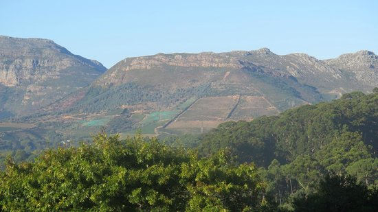 Klein Bosheuwel Guest House: Constancia wineries viewed from guesthouse