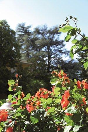 Sonnenburg: Garten
