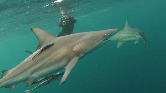 Shark Cage Diving KZN: John taking pic's