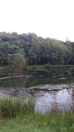 Court Farm: Fishing lake