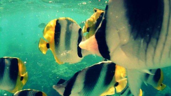 Moana Adventure Tours: Jardin de Corail