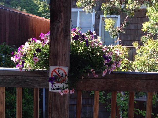 Sea Star Guesthouse: But the flowers were pretty outside the room! You know, the ones by the sign.